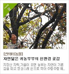 자연이 만든 친환경 곶감 생산농장 신의터농원