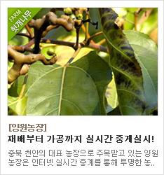 친환경유기농산물 인증을 받은 친환경 양원농장